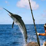 all year round fishing in Cuba